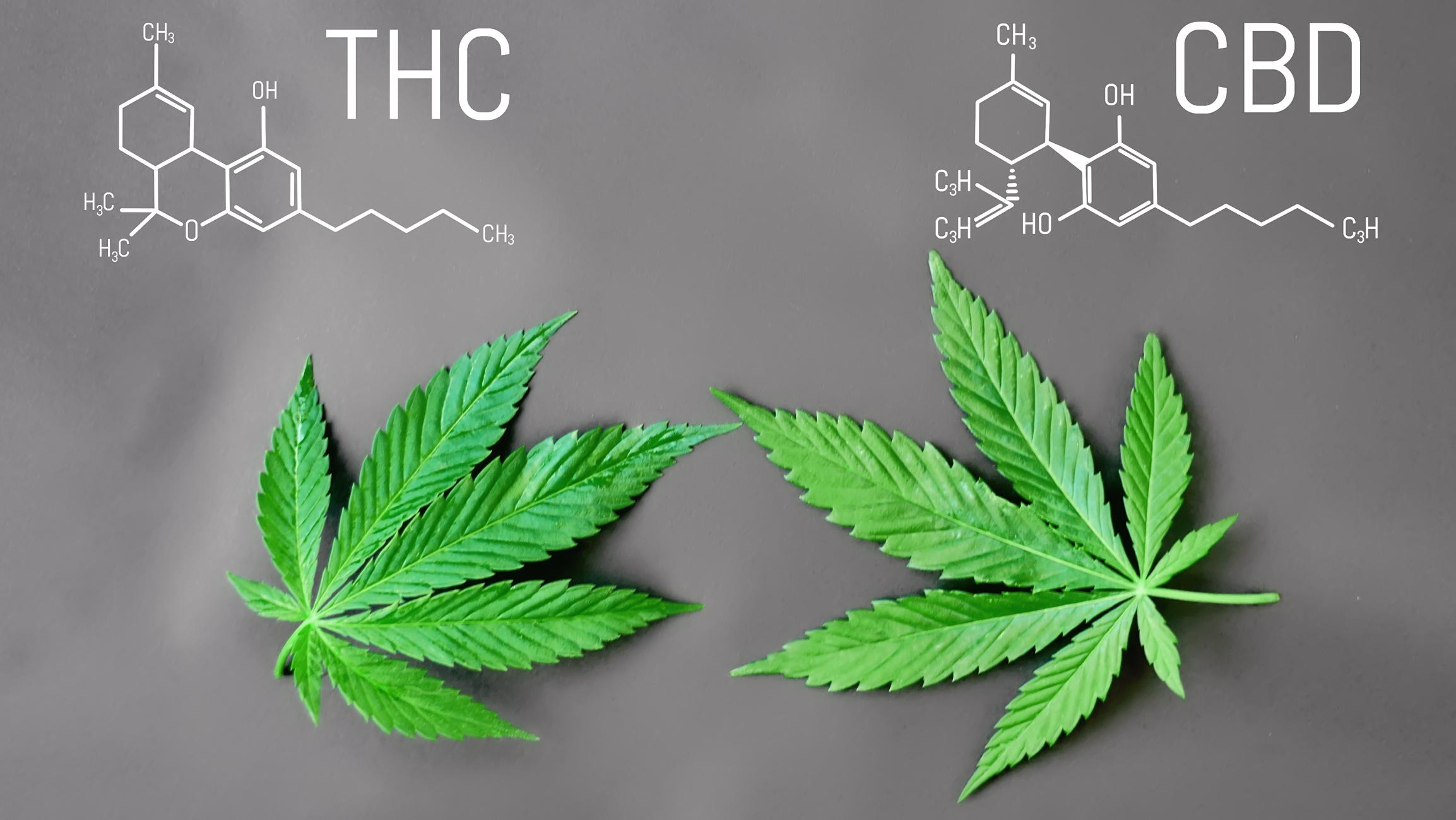 How CBD Blocks THC Euphoria Explained